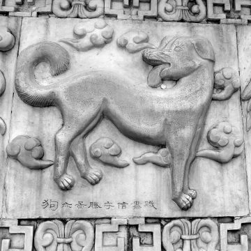 Signos del Horóscopo Chino: el perro de madera